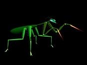 Una mantis tipo Cartoon-mantis.jpg