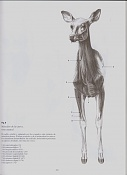 LIBROS-ciervo.jpg