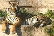Fauna-tigrebaja.jpg
