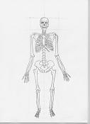 aprendizaje de J R Segura-esqueleto1.jpg