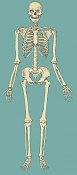 aprendizaje de J R Segura-skeletonant.jpg