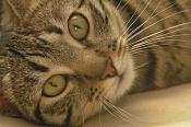 Fauna-p3246575.jpg