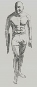 La anatomia y yo-anat49.jpg