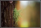Fotos Naturaleza-448768769_5441011fef_b.jpg
