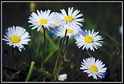 Fotos Naturaleza-448671259_e67169982d_b.jpg