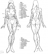 V-hunter-image_woman-anatomy.jpg