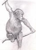 animals-s house-chimpa.jpg