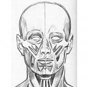 Nueva cabeza-frentecara.jpg