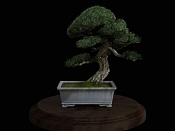 bonsai   more-bonsai17.jpg