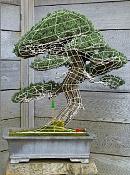 bonsai   more-malla.jpg