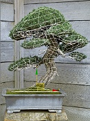 bonsai   more-malla.jpg