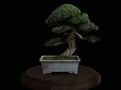 bonsai   more-bonsai13.jpg