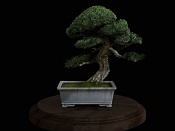 bonsai   more-bonsai13.jpg