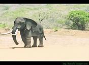 Travesia  elefante -travesia.jpg