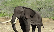 Travesia  elefante -materiales.jpg