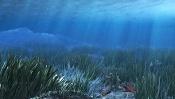 fondo marino-fondo-marino.jpg
