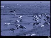 Fotos Naturaleza-playa.jpg
