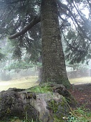 Fotos Naturaleza-dsc01247.jpg