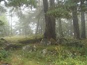 Fotos Naturaleza-dsc01245.jpg
