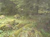 Fotos Naturaleza-dsc01252.jpg