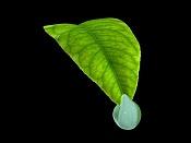 Gota de agua chunga-gota_agua_2.jpg