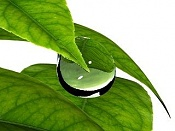 Gota de agua chunga-hoja___gota_2.jpg