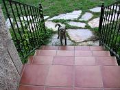 acabo de adoptar una perrilla  -nana-020907-01.jpg