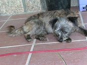 acabo de adoptar una perrilla  -nana-020907-02.jpg
