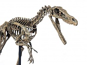 Velociraptor-velociraptor6.jpg