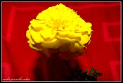 Flora-flor2.psd.jpg