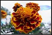 Flora-flor1.jpg