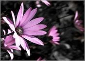 Flora-127677444cde0f5475bb9df.jpg