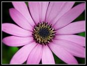 Flora-1276715826176e20e3ab7je.jpg
