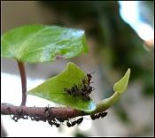 Fotos Naturaleza-hormigas_04.jpg