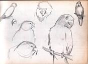 Dibujos rapidos , Bocetos  y apuntes  en papel -lorillo.jpg