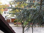 Desde mi ventana-desde-mi-balcon_mi-cartero-.jpg