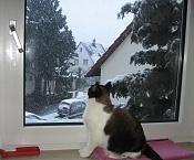 Desde mi ventana-freya-viendo-nevar1vez_marz.jpg