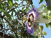 Flora-florrara.jpeg