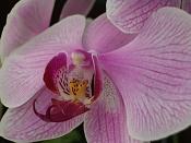 Flora-imgp4866.jpg