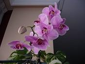 Flora-imgp4872.jpg
