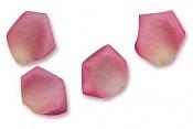 donde encontrar texturas de petalos     -petalos-muchos.jpg