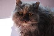 Fotos de Mascotas-dsc_0375.jpg