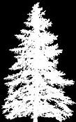dos_montajes-arbol_alpha21.jpg