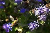 Macrofotografia-insecto.jpg