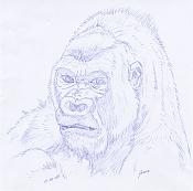 Dibujos rapidos , Bocetos  y apuntes  en papel -gorilila.jpg