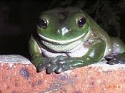 WIP: Logotipo de clinica dental-smiley_frog.jpg