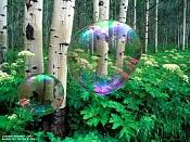 Burbujas-burbuja1000x750b.jpg