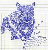 Dibujos rapidos , Bocetos  y apuntes  en papel -pinky.jpg