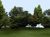Iniciacion en exteriores  ayudadme a mejorarla, plis -bosque_bien.jpg