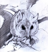 Dibujos rapidos , Bocetos  y apuntes  en papel -071211.jpg
